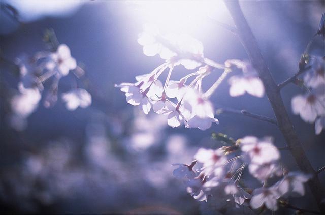 日系清新照片拍摄指南 | 胶片的味道