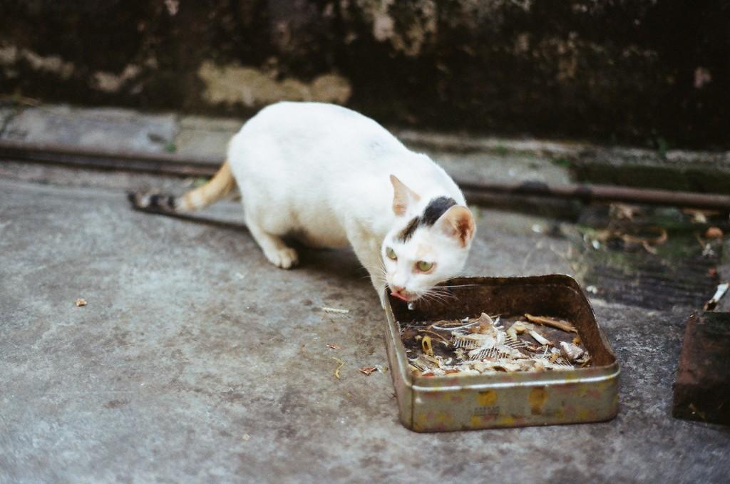 投稿作品No.26 喵,猫   胶片的味道