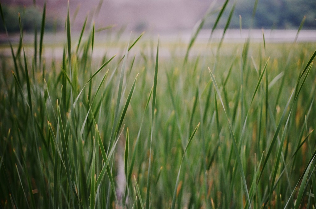 请想起我如绿草