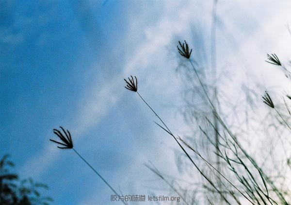 way of life (7)