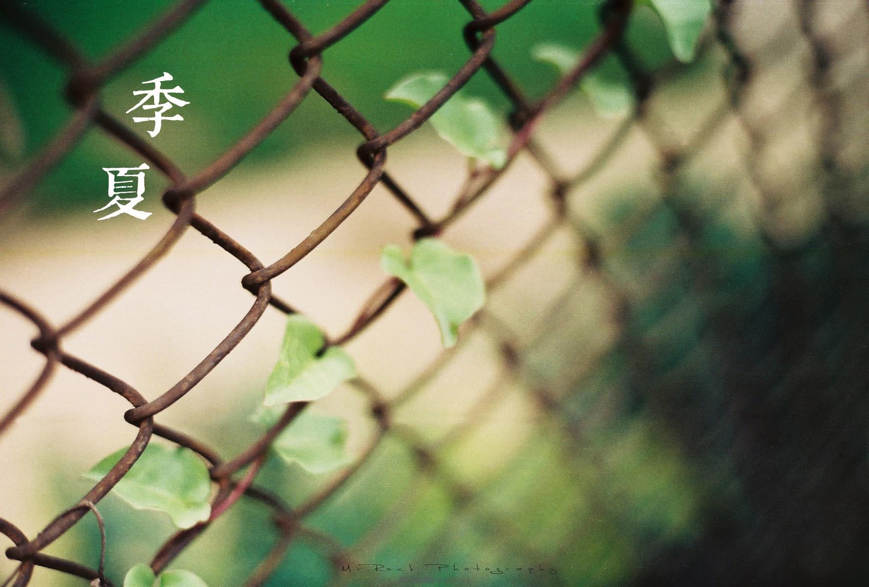 菲林日记·六月季夏 (12)