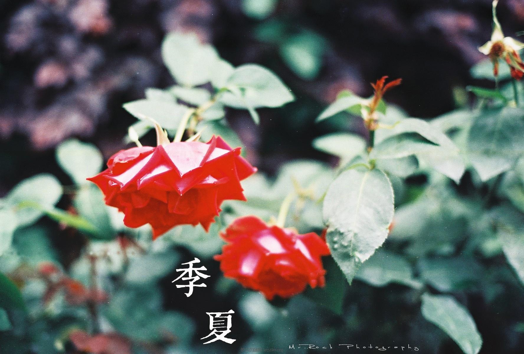 菲林日记·六月季夏 (10)