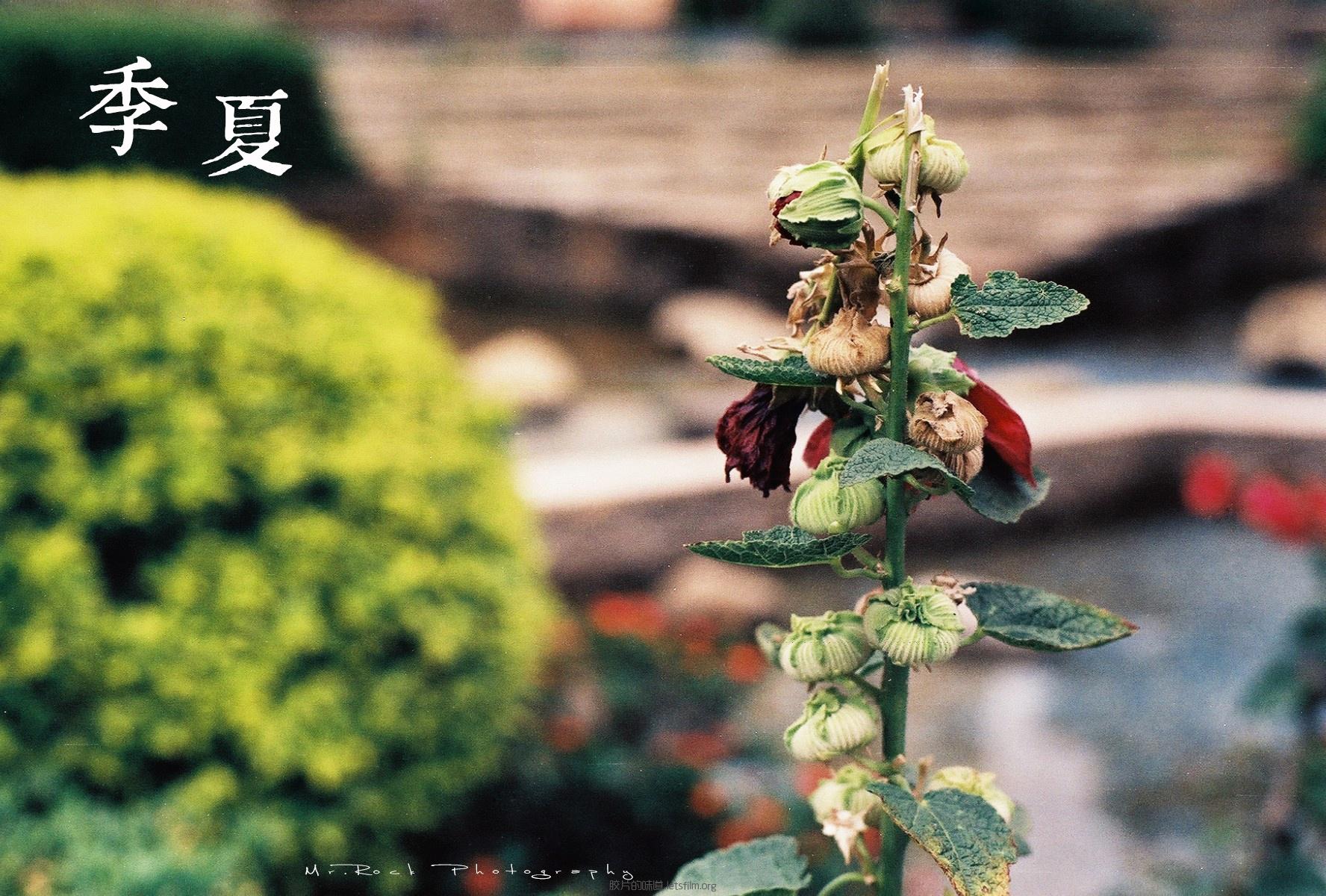 菲林日记·六月季夏 (6)