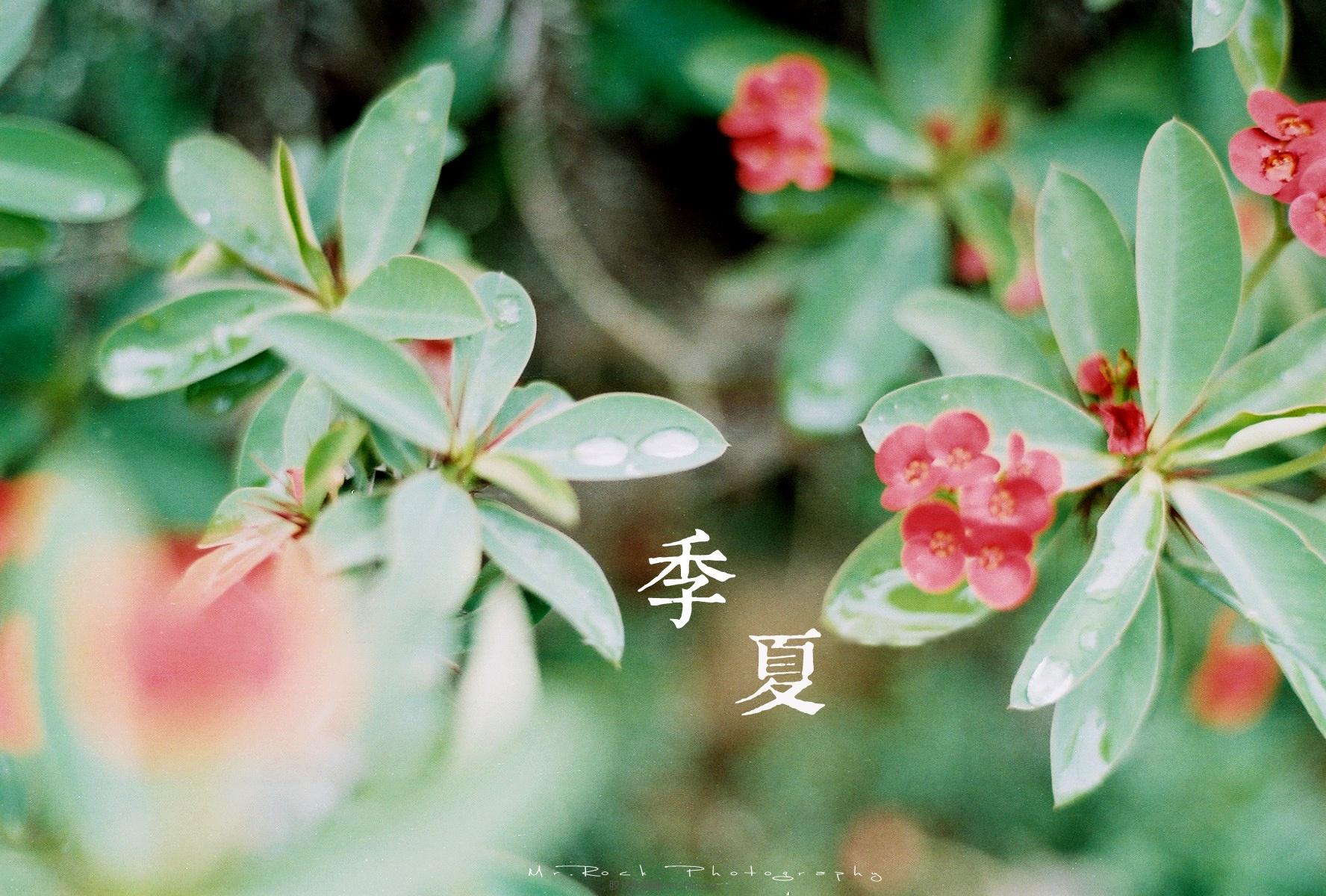 菲林日记·六月季夏 (4)
