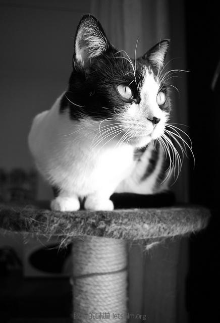 见习黑猫警长的日常 (9)