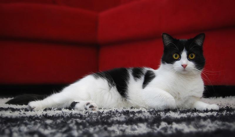 见习黑猫警长的日常 (7)