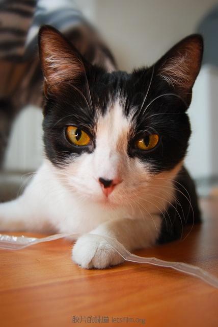 见习黑猫警长的日常 (8)