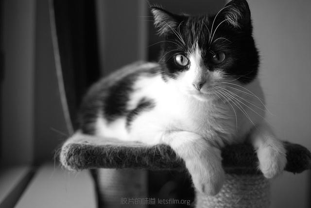 见习黑猫警长的日常 (6)