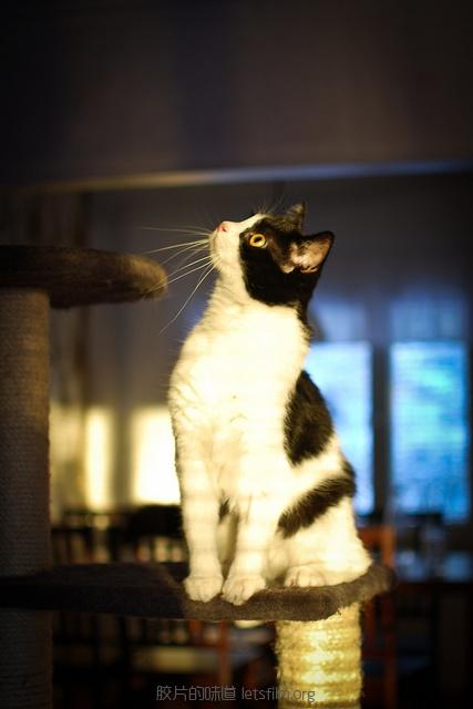 见习黑猫警长的日常 (3)
