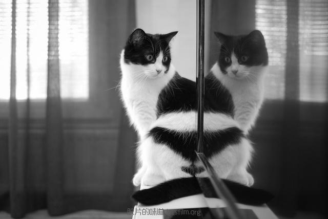 见习黑猫警长的日常 (2)