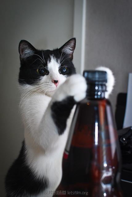 见习黑猫警长的日常 (1)