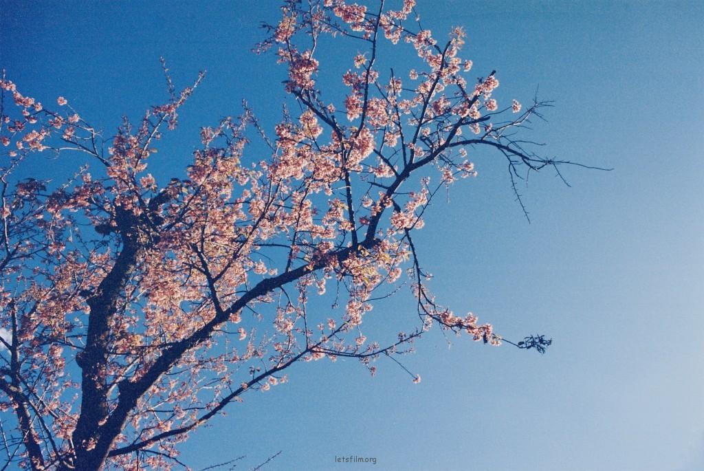 云南记忆-大理双廊
