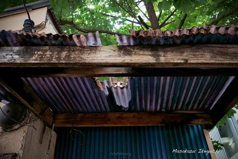池口正和的日本流浪猫