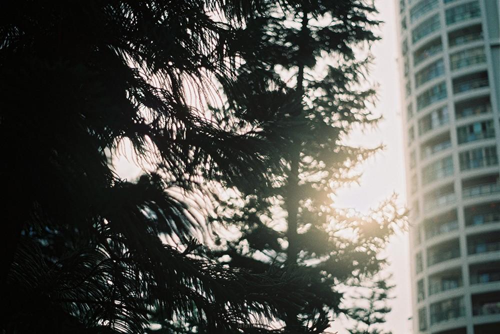每一天睁开眼 我们都是蜉蝣 平平凡凡生活 轰轰烈烈追逐 一个梦