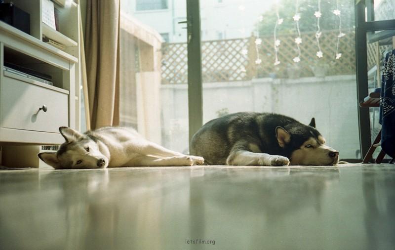 狗子们的慵懒下午