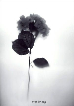 黑白摄影的光源色调