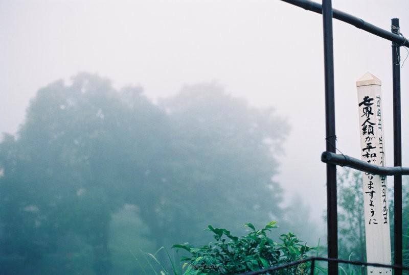我爱你尘雾中的笑容