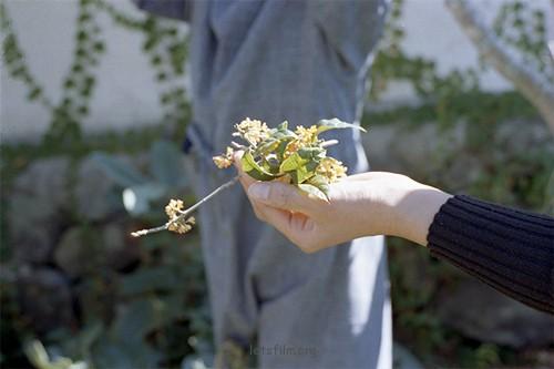箱庭的季节 - 林田摄子