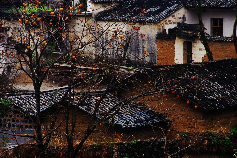 2007雨中宏村塔川--胶片里的回忆