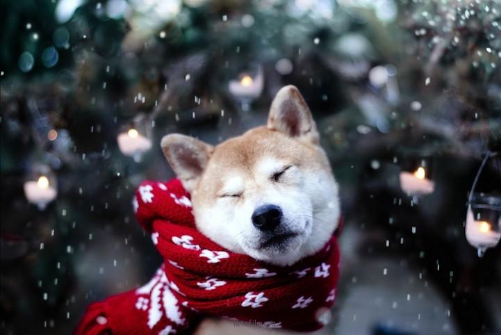 Jessica Trinh的狗狗画像