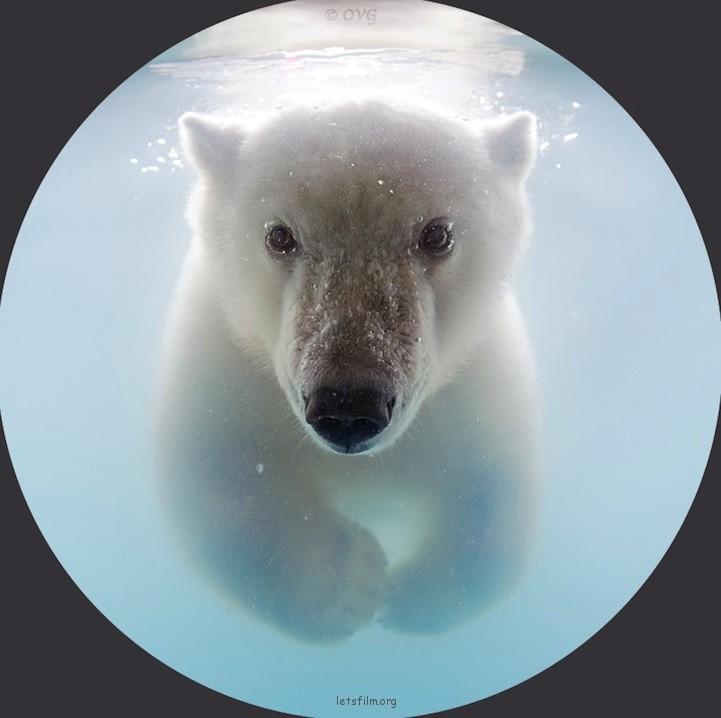 北极熊宝宝