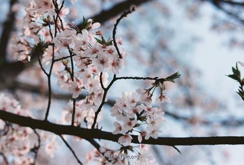 3月的武汉