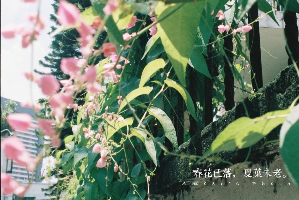 镜头里的花花草草