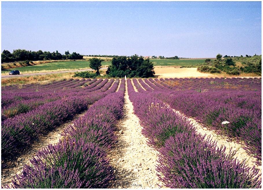 在路上-紫色的气味
