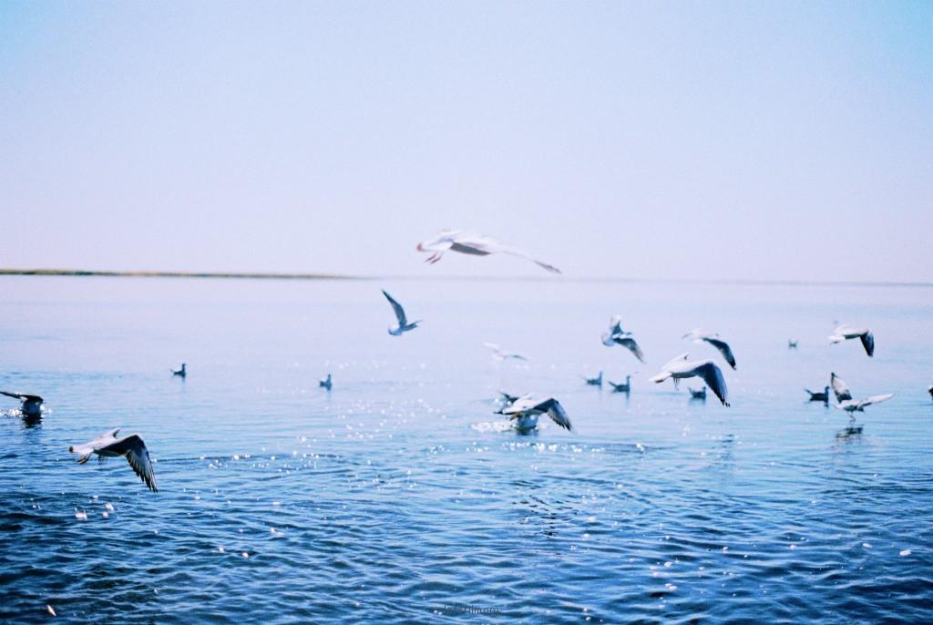 额济纳-居延海1