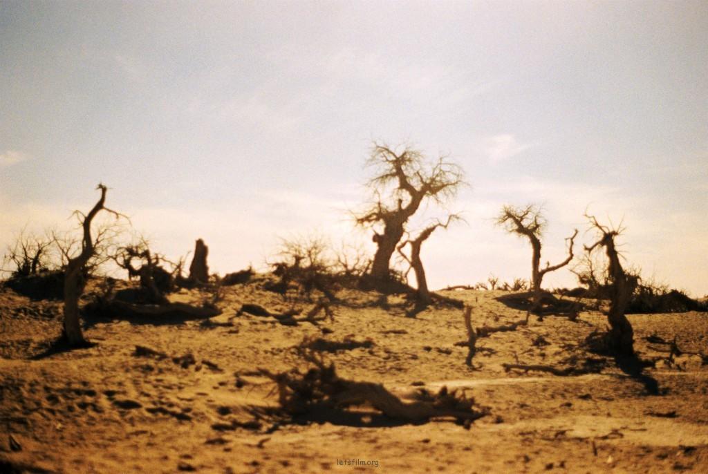 额济纳-怪树林1