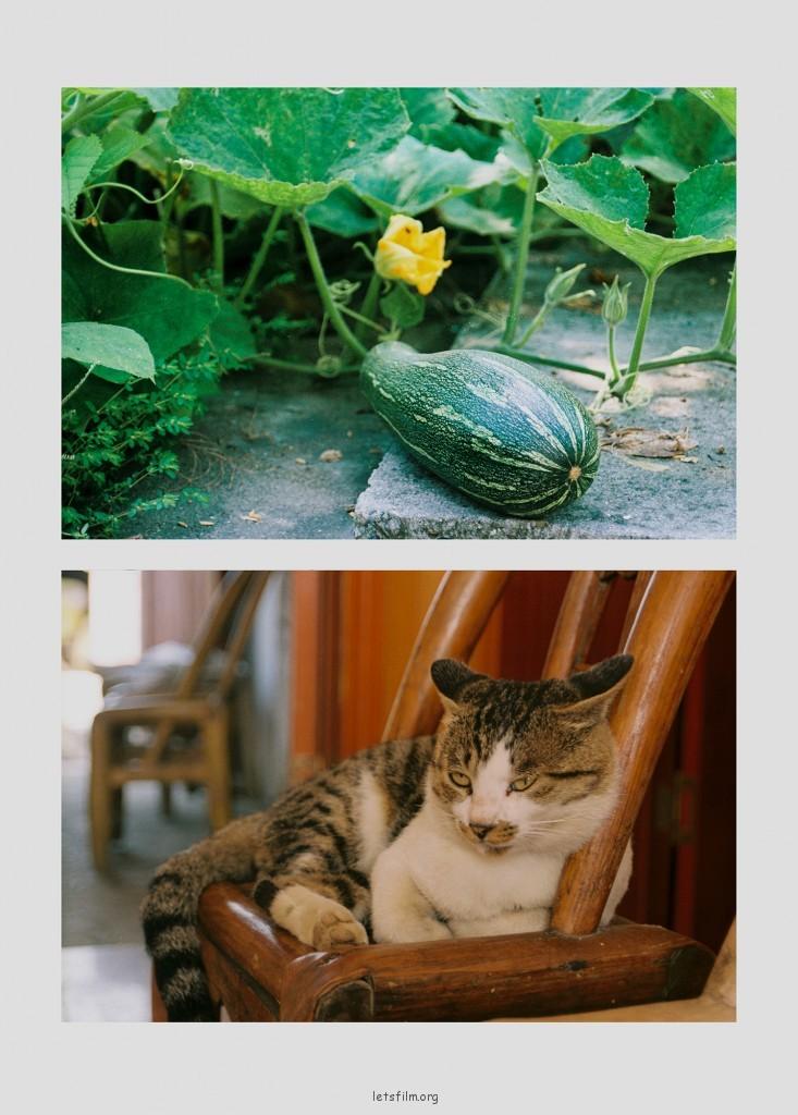 懒得像瓜一样的猫