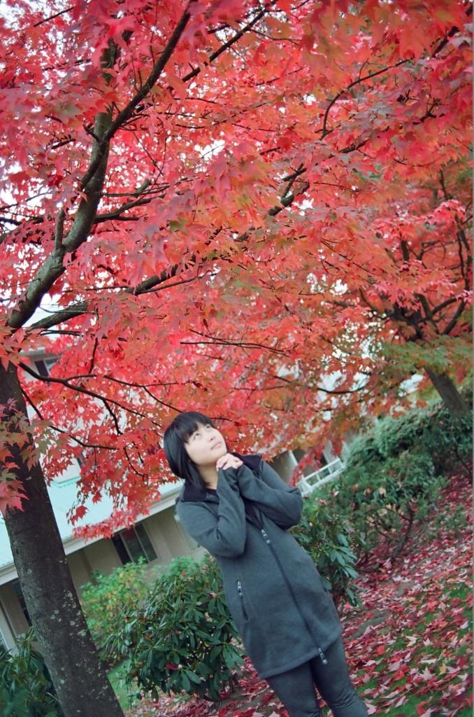 寻找秋天的枫叶