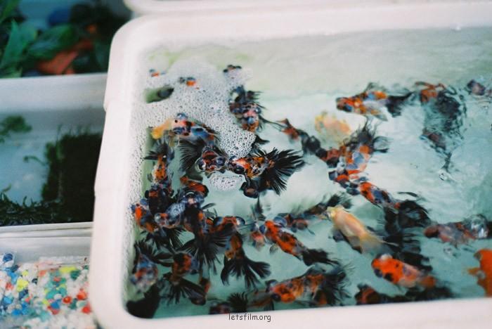 花鸟市场的下午