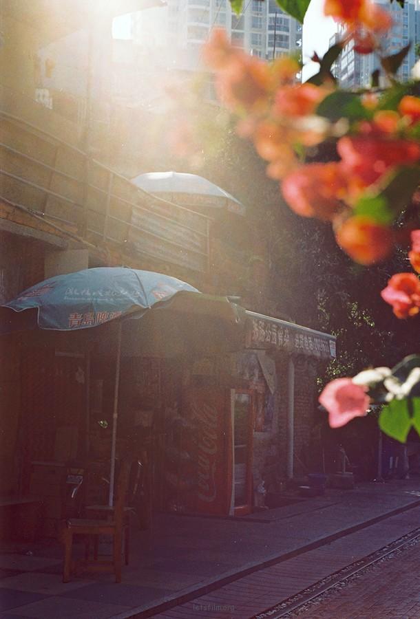 投稿作品No.620 在路上,遇见阳光,植物,还有爱 | 胶片的味道