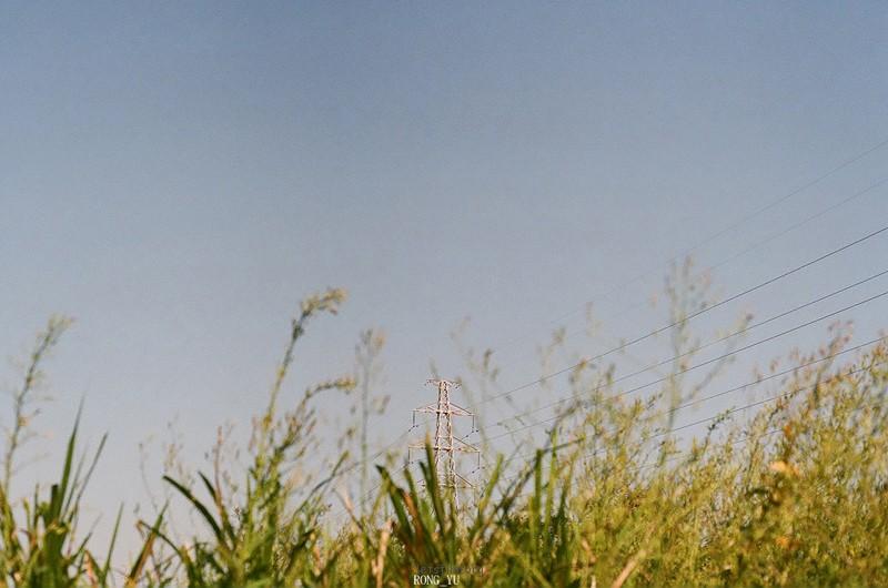 狗尾草长满的小土沟