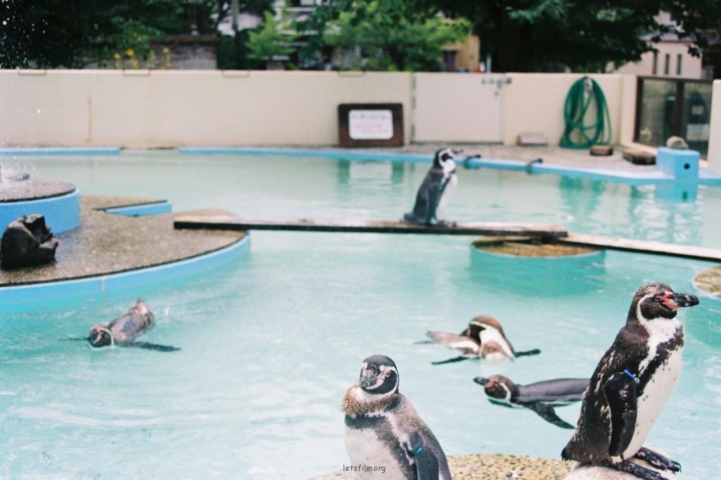動物園的孩子們
