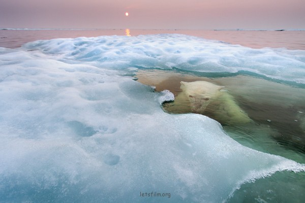 美麗與震撼!2013年野生攝影獎作品3-600x399