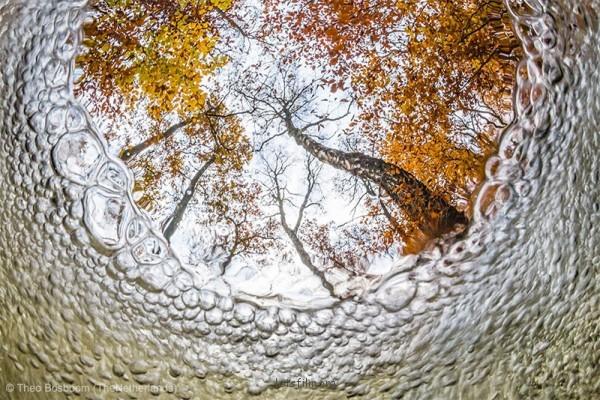 美麗與震撼!2013年野生攝影獎作品7-600x400