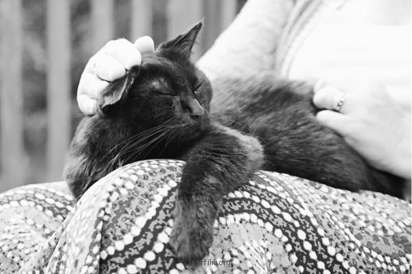 養過寵物的人會懂...寵物訣別前的最後歡樂時光攝影集10-600x399