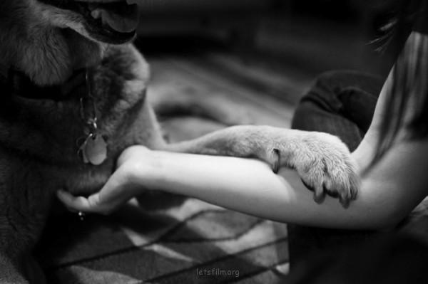 養過寵物的人會懂...寵物訣別前的最後歡樂時光攝影集2-600x399
