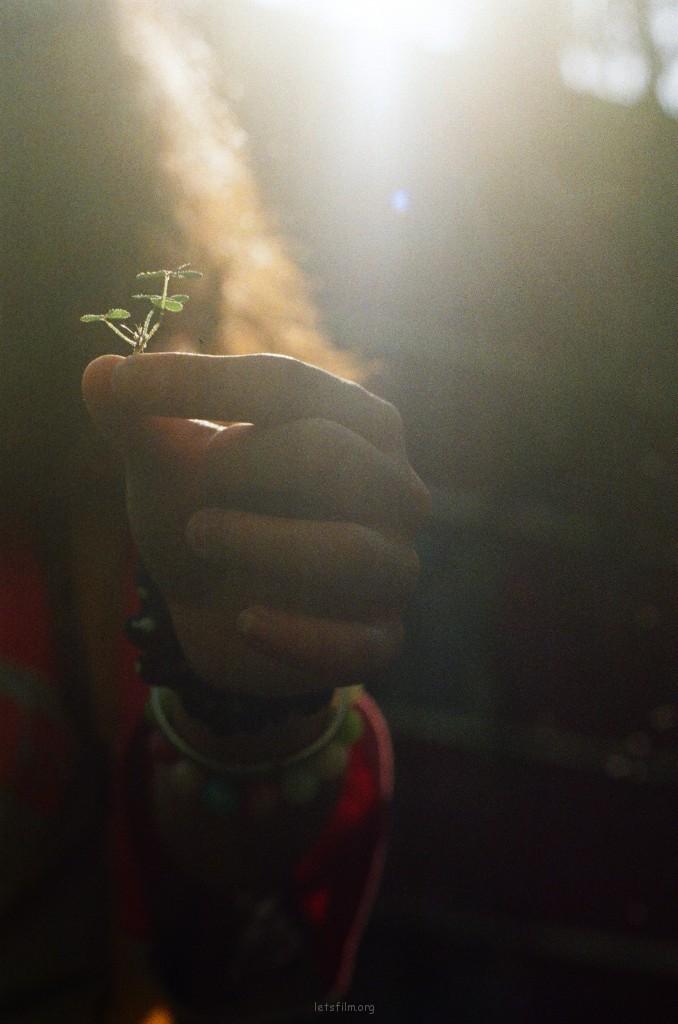 总有人相信三叶草与幸福有关。虽然我不信,但是我承认其实也挺有意思。