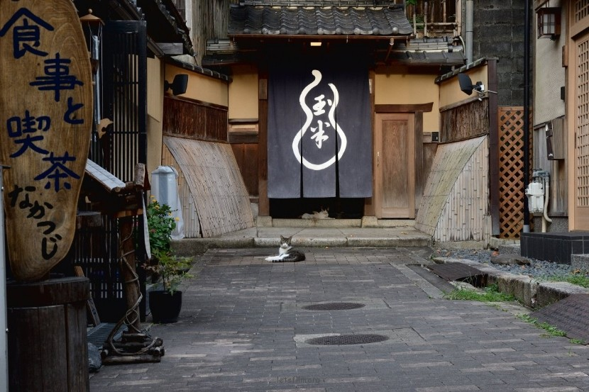 27023d898e_kyotocat01