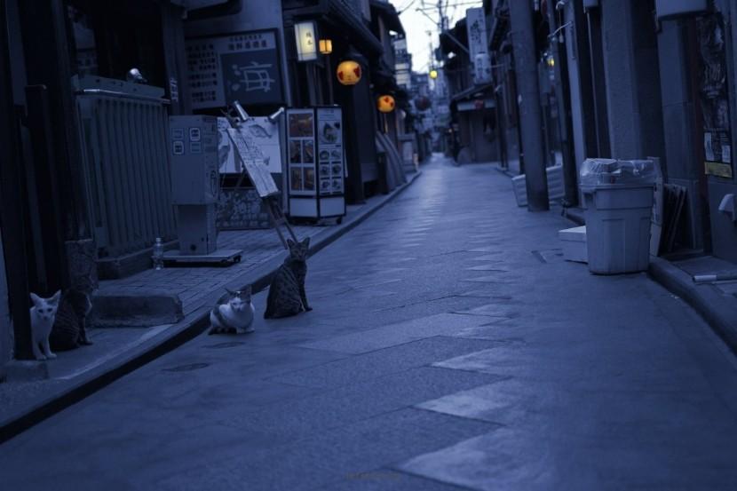 27023d898e_kyotocat02
