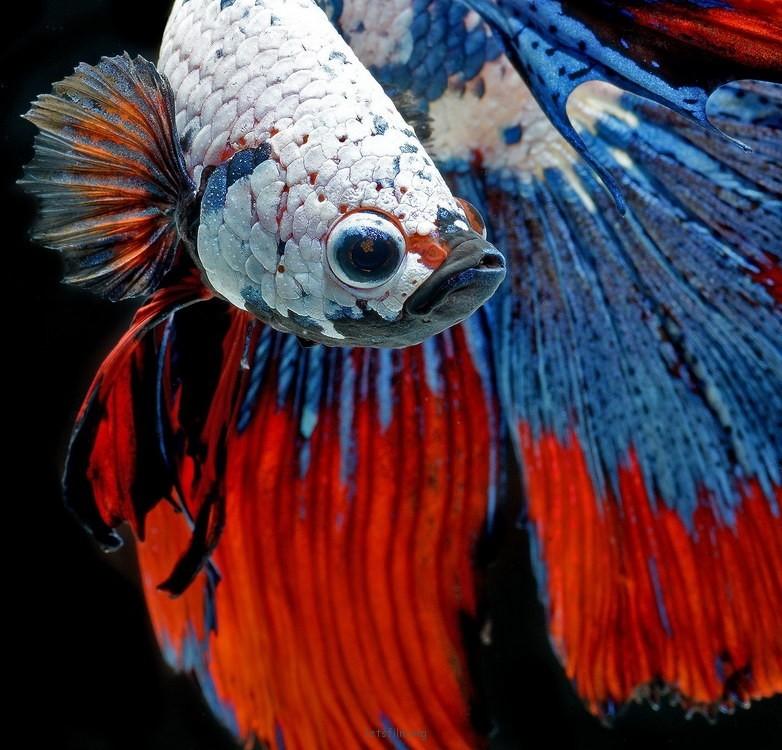 5c9de20553_fish01
