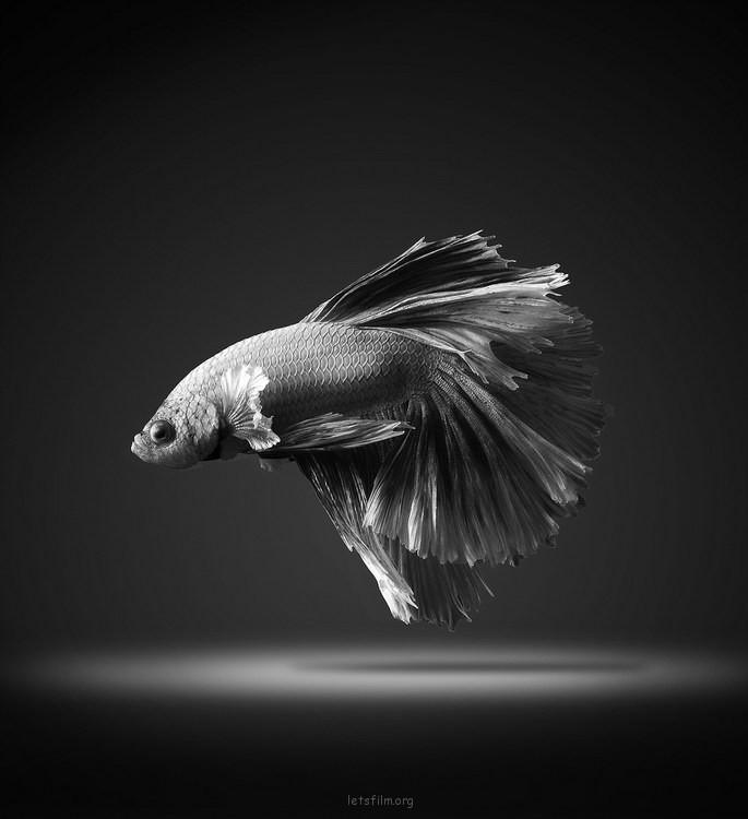 5c9de20553_fish03