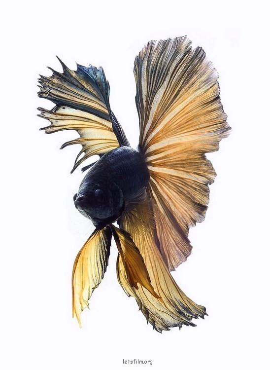 5c9de20553_fish05