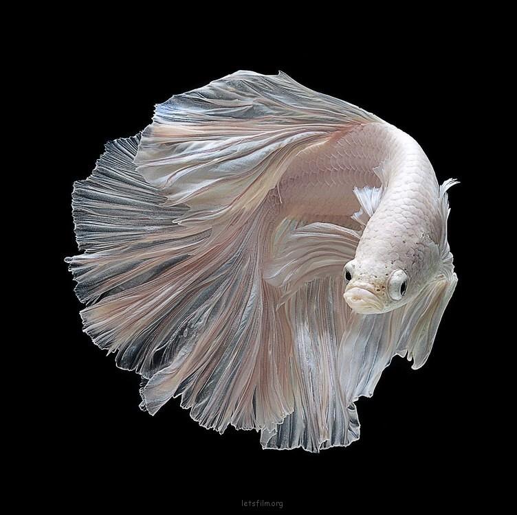 5c9de20553_fish06
