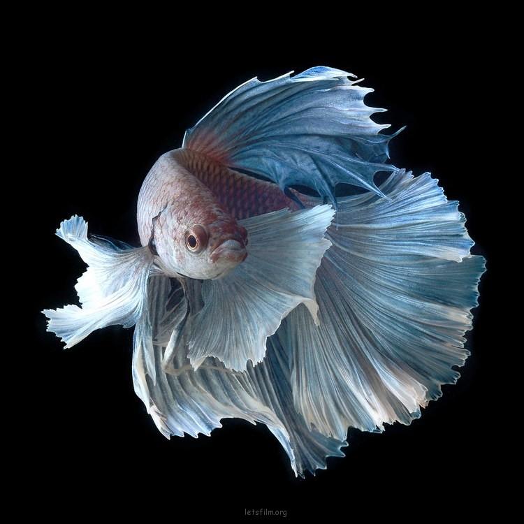 5c9de20553_fish07