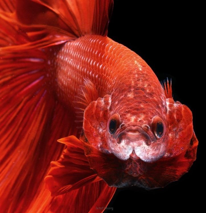 5c9de20553_fish08