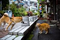 东京街猫摄影师大集合——东京猫色